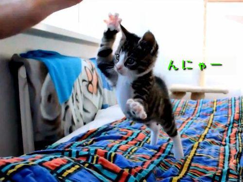 飛びかかってくる猫