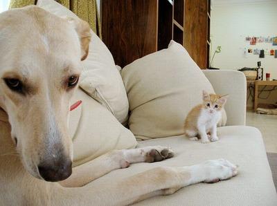 邪魔する犬と猫05