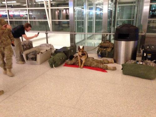 空港の軍犬01