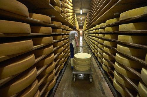 スイス・チーズ20