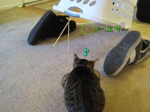 猫に原始的なトラップ00