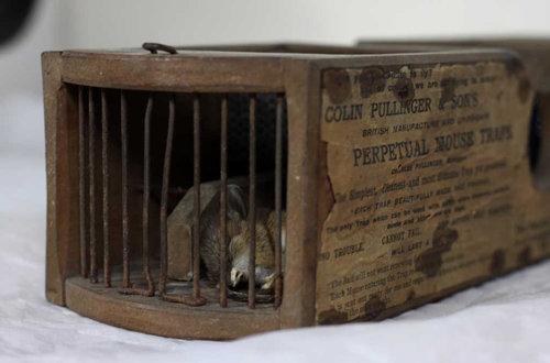 博物館の150年前のネズミ捕り01