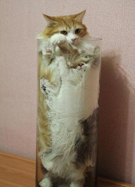 すき間にハマった猫17