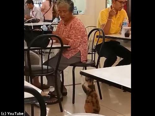 フードコートで猫がおねだり00