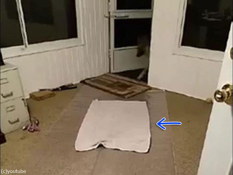 「犬がカーペットを汚さないように玄関にビニールの敷物を買った…」→結果はこの通り