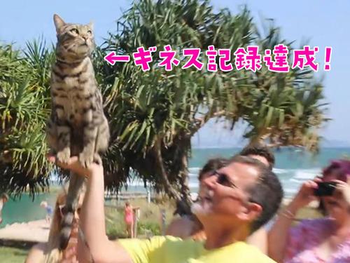 スケーター猫がギネス記録達成00