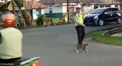 警官が猫を誘導する様子に和む03