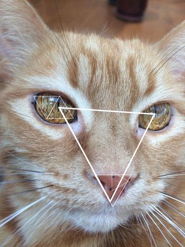 この猫の目がすごい05