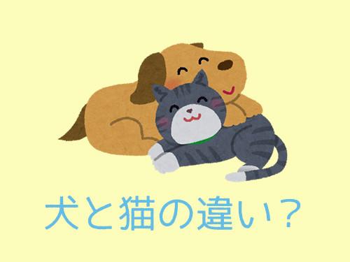 犬と猫の違い00