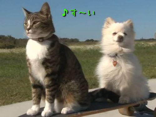 スケボー猫00