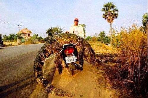 バイクで物を運ぶ限界14