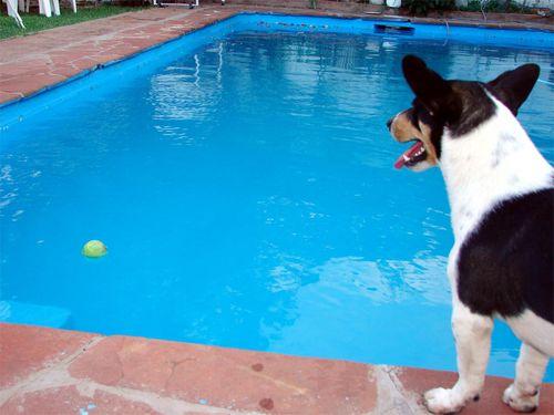 水中の犬00
