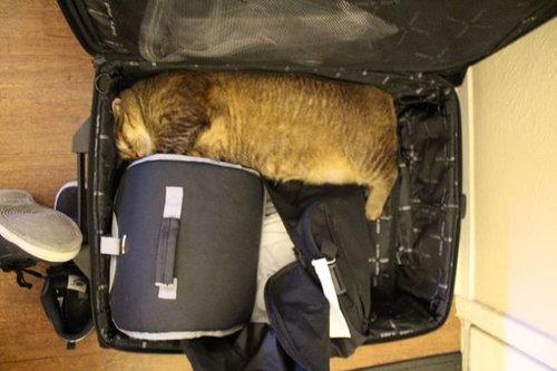 飼い主が旅行に行くことに気付いたペットたち15