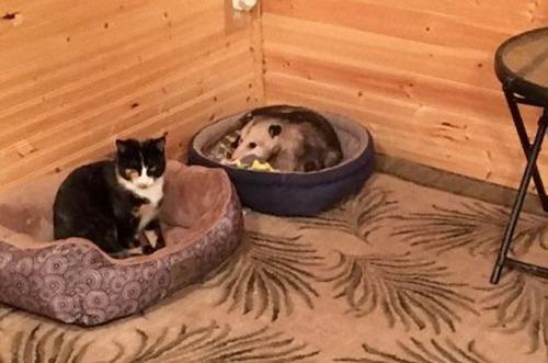 おばあちゃんと3匹の猫02