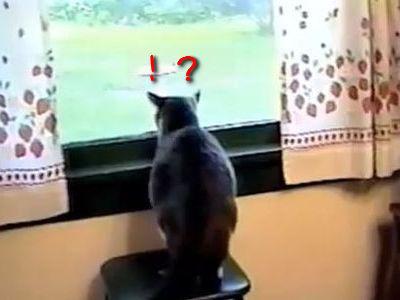 猫がクマにびっくり