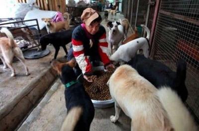 1500匹の犬と200匹の猫11