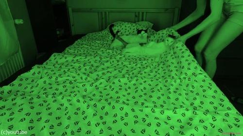 飼い主さんが眠っている間…猫たちはこんな感じ01