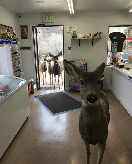 ギフトショップに鹿の親子04