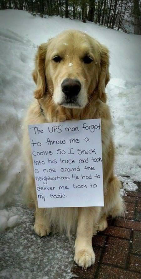 犬に後悔はなし01