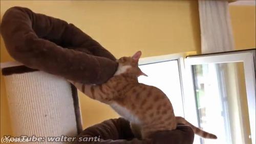 よりふかふかのベッドを探求する猫02