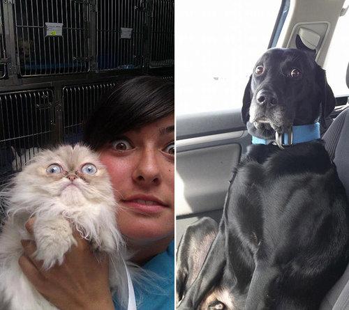 犬や猫を獣医に連れて行くと04