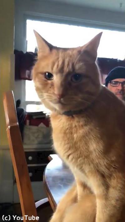 猫がテーブルに座る瞬間04