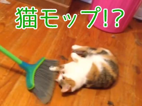 掃かれたい猫00