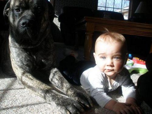 ペットと赤ちゃん08