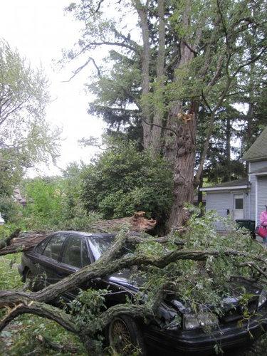 同じ木の枝が倒れた02