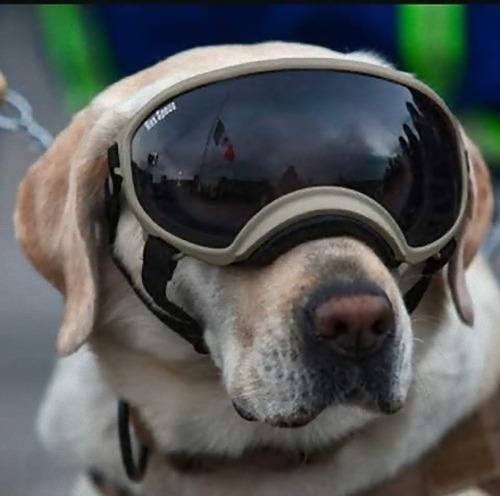メキシコ地震で52人を救った犬02
