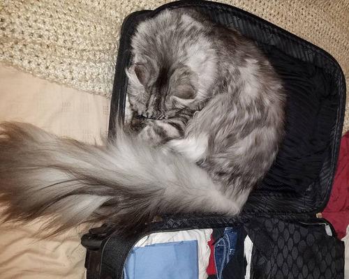 猫のしっぽが世界記録に08