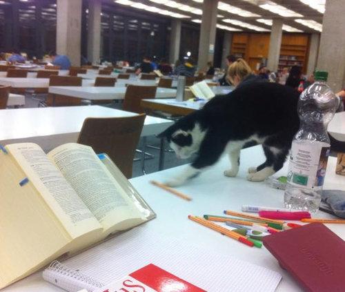 ドイツの大学で暮らす猫03