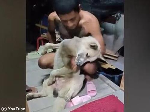お風呂を断固拒否する犬00