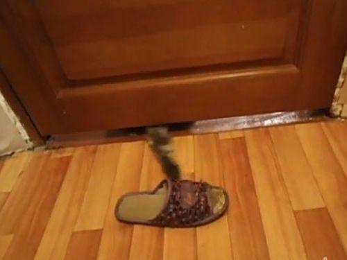 スリッパ泥棒の猫01
