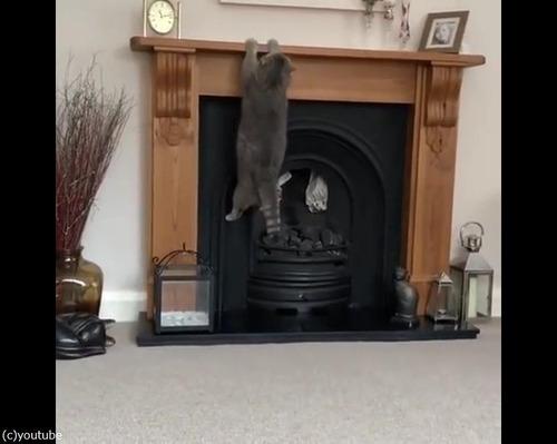 猫、暖炉に上ろうとするも失敗02