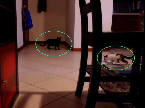 猫の三角跳び00