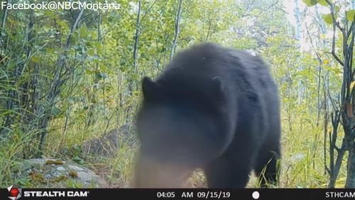 テディベアと遊ぶ野生のクマ02
