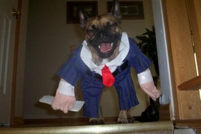 酷い犬のコスプレ07