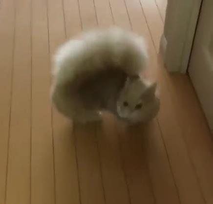 リスのしっぽをもつ猫03