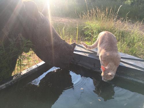 猫とサイが仲良し05