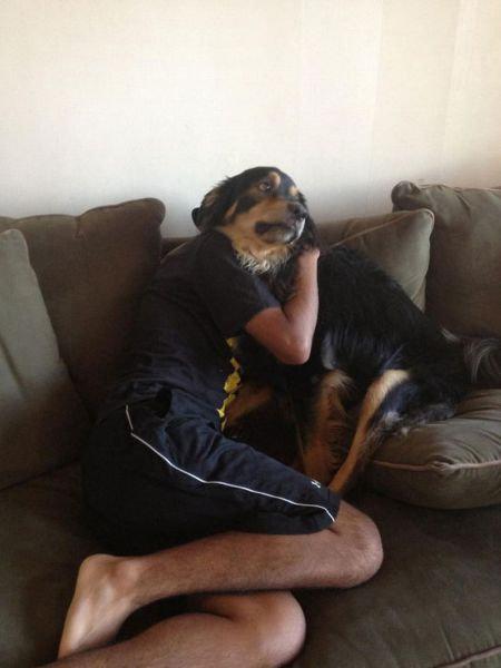 犬の決定的写真11