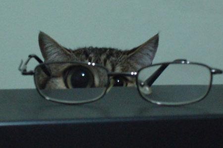 メガネ猫13