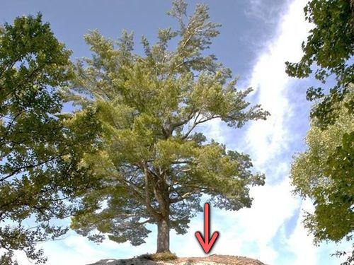 空中に根を伸ばす木00