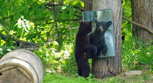 クマって人間っぽい07