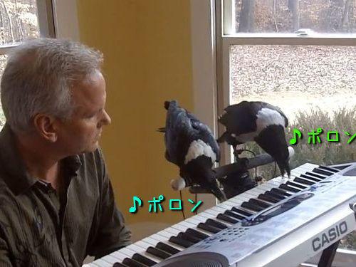 カラスのピアノ連弾