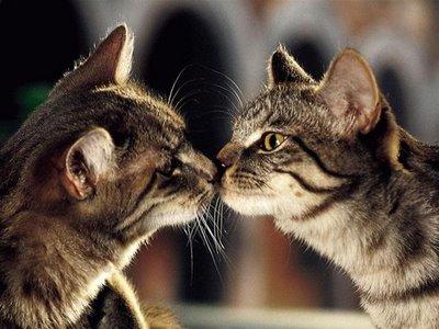 愛し合い猫10