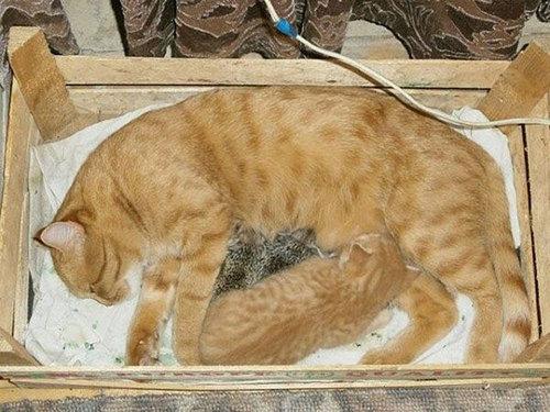 猫とハリネズミの赤ちゃん11