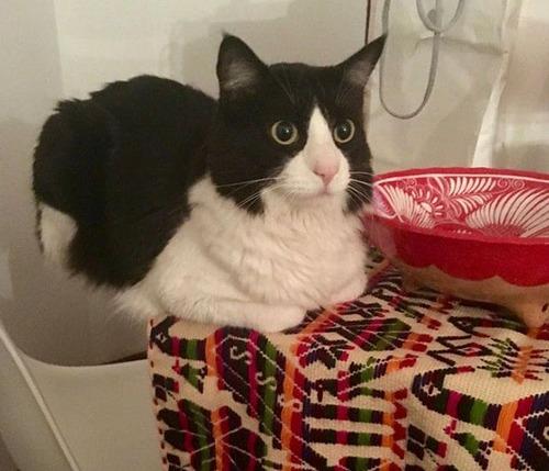 重力を無視する猫09