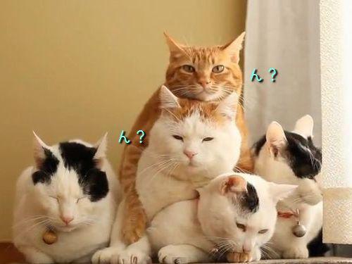 猫3段01