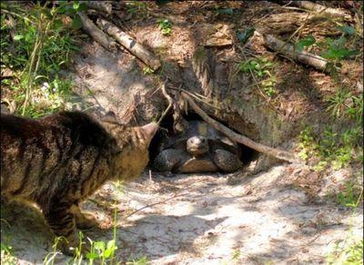 猫の王国09